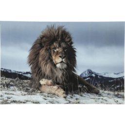 Proud Lion 120x180cm glassbilde