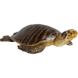 Deco Object Water Turtle Big