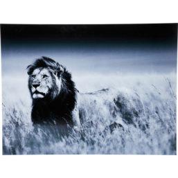 Glassbilde Lion King Standing 120x160cm