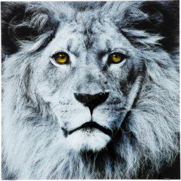 Glassbilde Face Lion 80x80cm